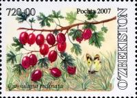 761.«Grossularia reclinata».