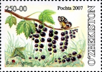 759.«Ribes nigrum»