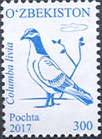 1183. «Columba livia» (Ko'k kaptar)