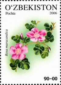 702. «Rosa maracandica»